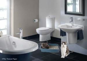 Bathroom Chat Litter Box Tips