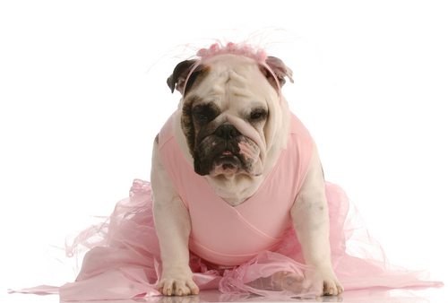 Dog in pink costume