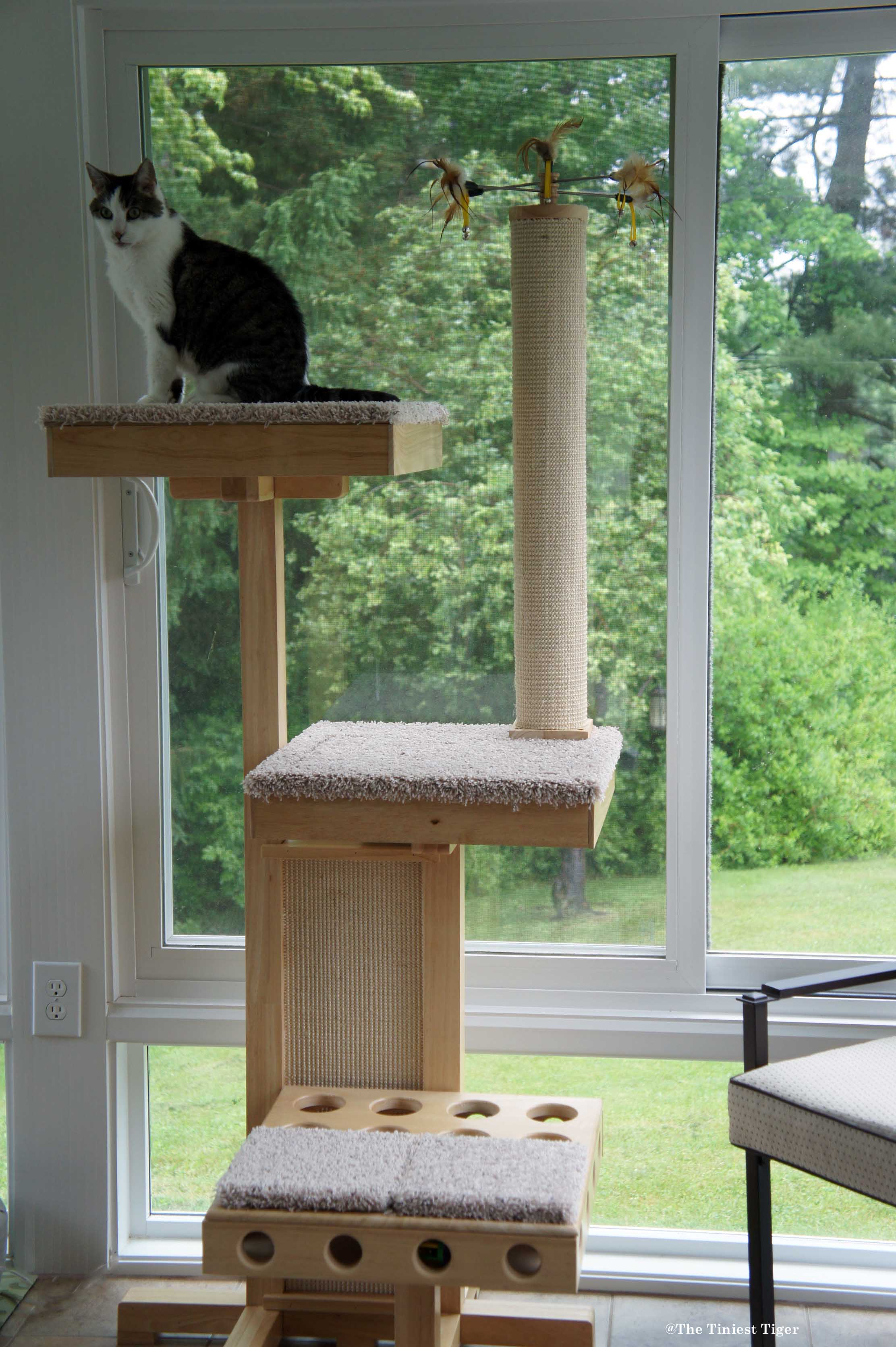 Keeping Your Home Cat and Human Friendly