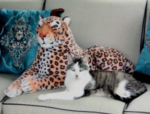 Lazy Leopard and Gracey