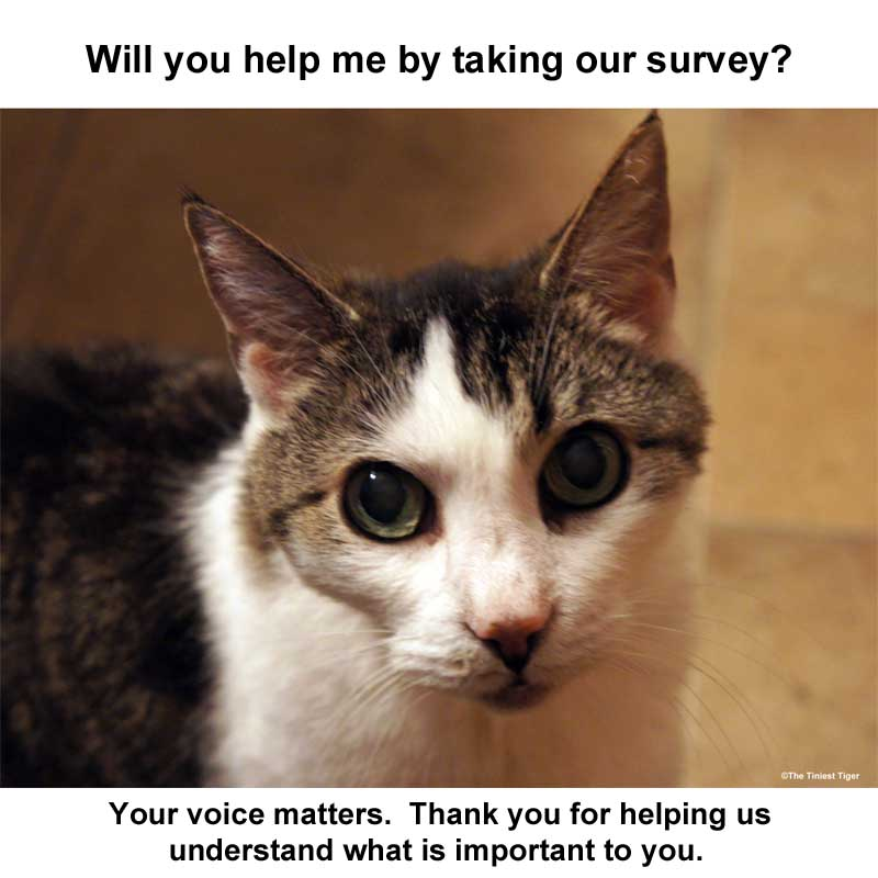 Pet Food Preference Survey for Cat and Dog Parents