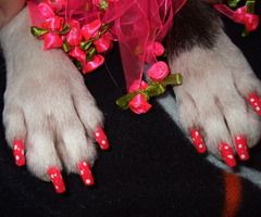 Dog with painted nails