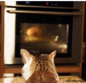 Gracey Watching Turkey
