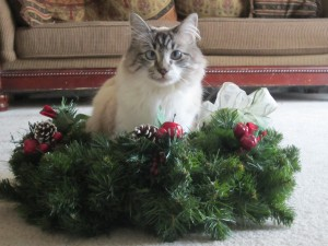 Miranda's Missy in the center of a wreath