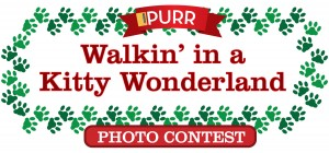 Walkin in a Kitty Wonderland Photo Contest