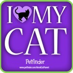 I love my cat petfinder