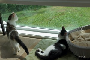 Annie and Eddie in sunroom