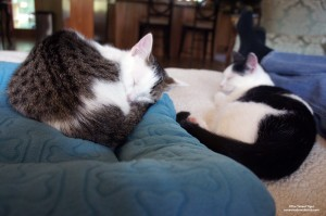 Annie and Eddie napping