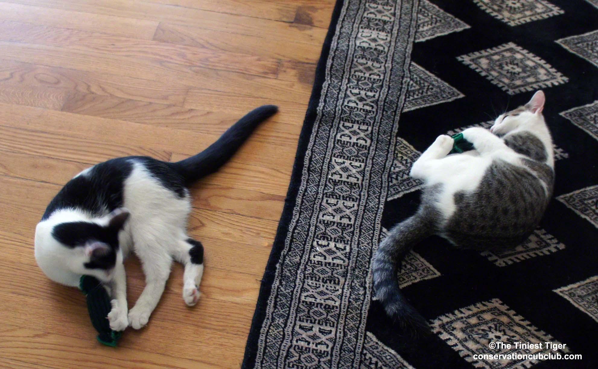 TipsyNip Tames the Kittens   Tickle Gherkins Giveaway