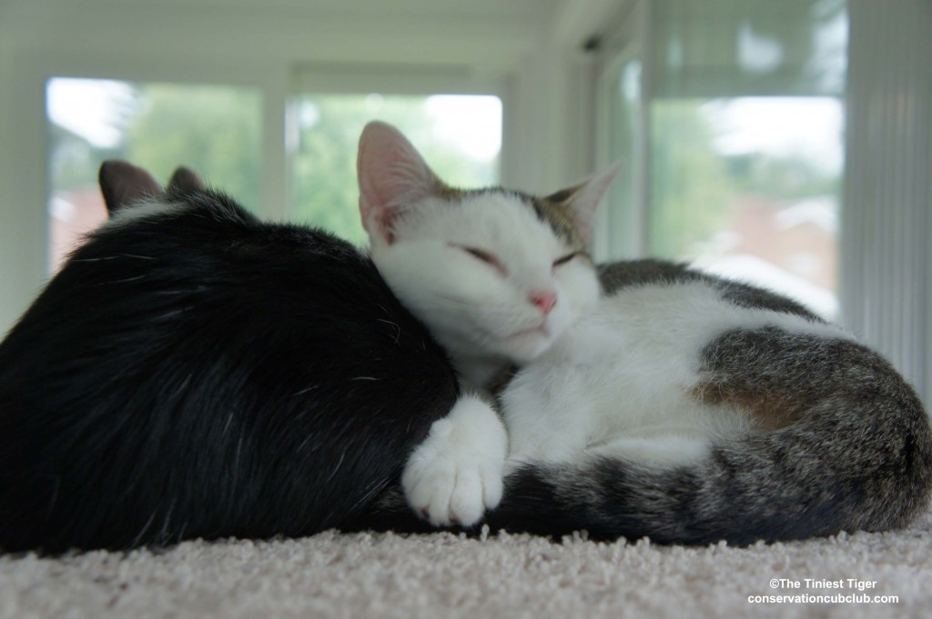 Annie and Eddie sleeping on cat power tower