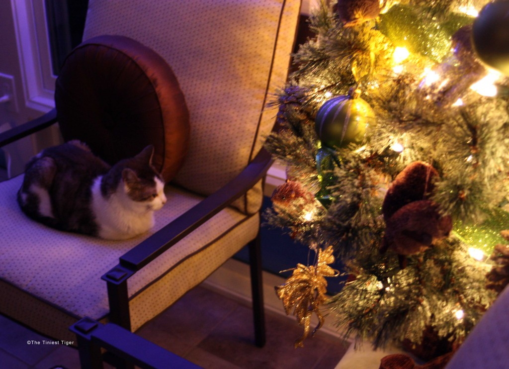 Christmas tree wtih Gracey