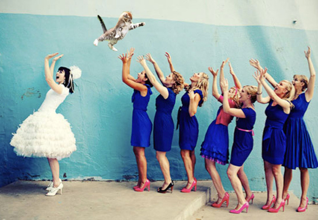Brides Throwing Cats    Cats Wearing Tights     Reader Opinion Poll