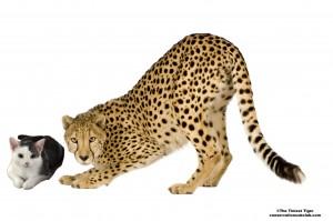 Annie and Cheetah
