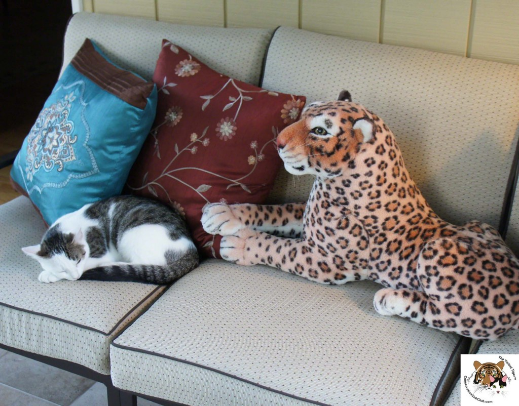 Annie Guarded by Lazy Leopard