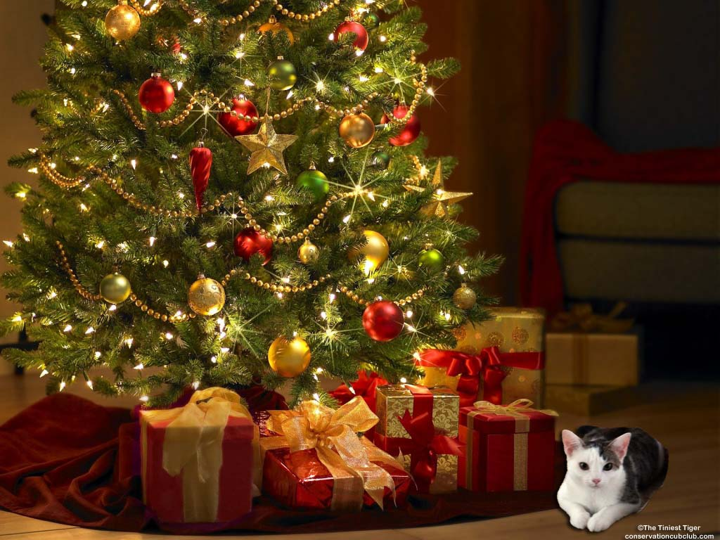 Annie Under Christmas Tree