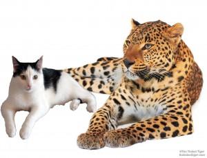 Eddie and Leopard