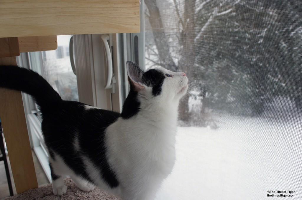 Eddie snowflakes