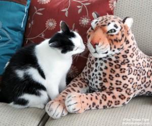 Eddie listening to Lazy Leopard