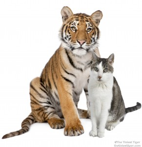 Gracey and Tiger cub