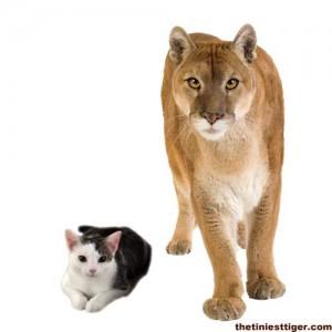 Annie and Puma