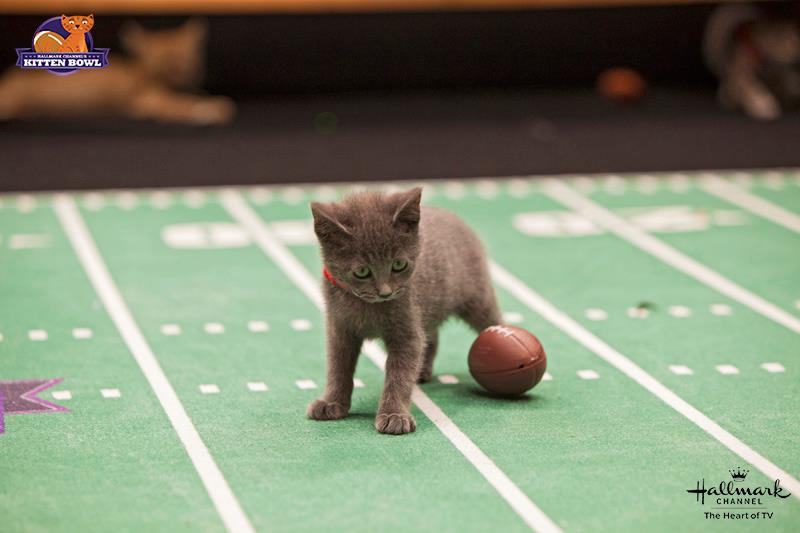 Hallmark Channel's Kitten Bowl and Rachael Ray's Nutrish for Cats