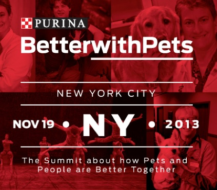 Relieving Pain in Pets by Dr. Robin Downing from #BetterwithPets