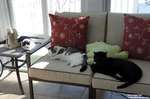Eddie, Annie Mercy in sun room