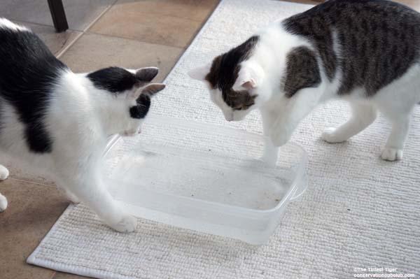 Annie encourages Eddie to try water