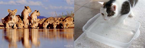 annie crouched lions water hole