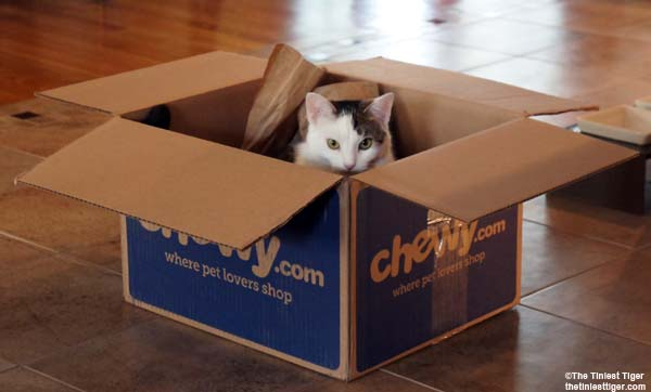 Annie in box