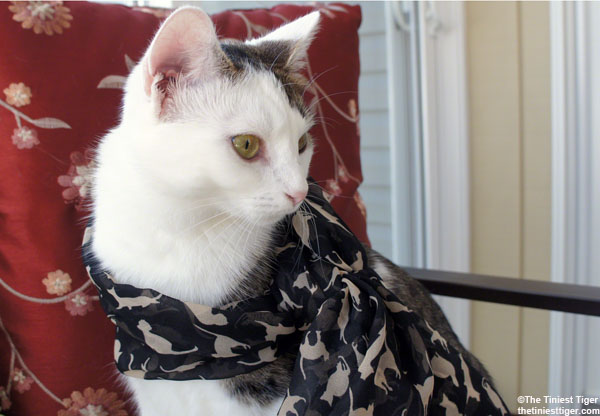 Cat Print Scarf Giveaway