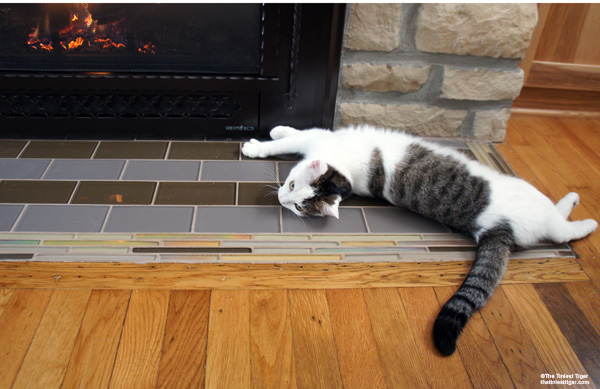 Annie stretched out in front of fire