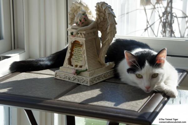 Eddie by Angel