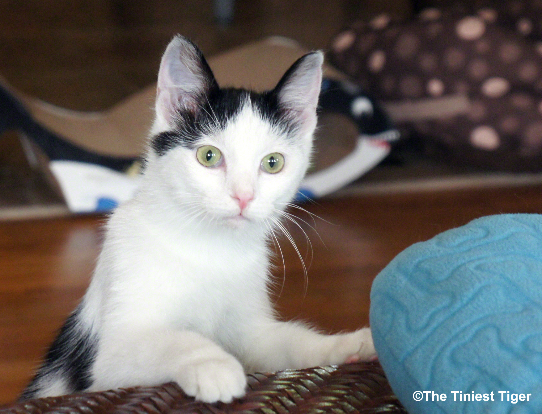 9 Little Things We Love About Our Cat Eddie