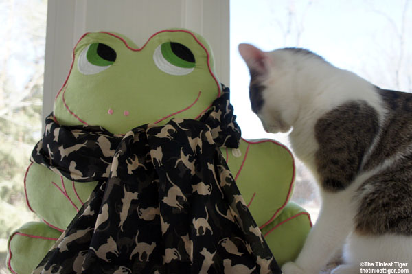 Frog with Annie cat print scarf