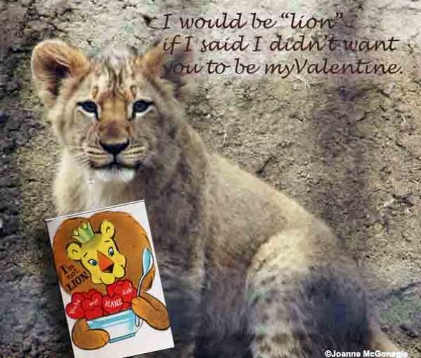 Lion cub Valentine 2014