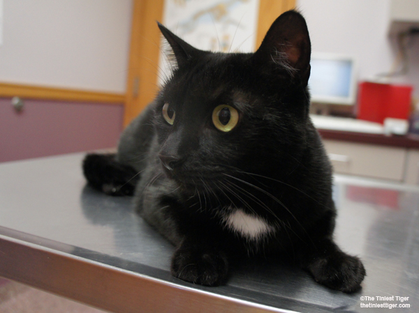 Cat Symptom Checker. Is Your Cat Showing Signs of Illness?