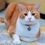 Robin's Cat Roger