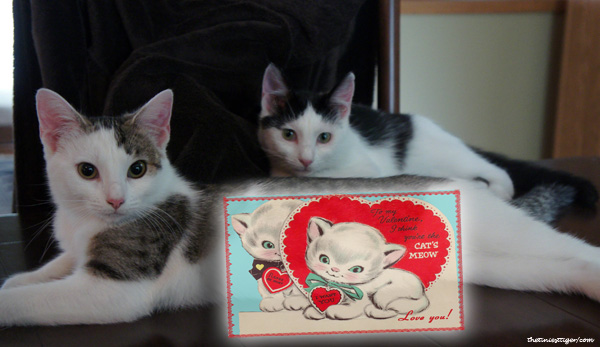 5 Valentines Created by Cats
