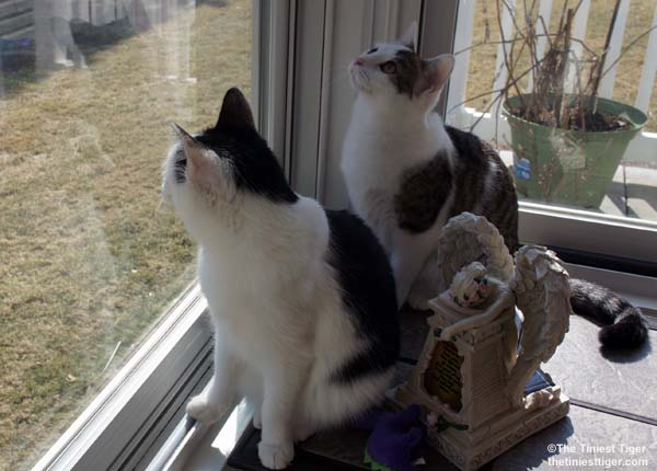 Cats Are Ready To Pounce on Spring!