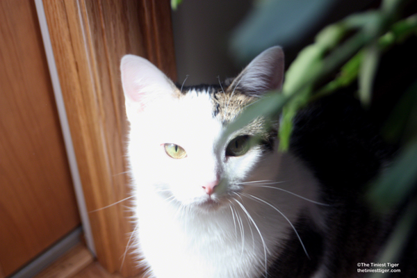 Fighting Back Against The War on Cats. The Truth About Cat-Scratch Disease
