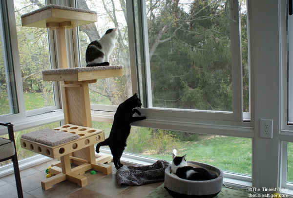 Cats Observe Birds From the Safety of the Great Indoors