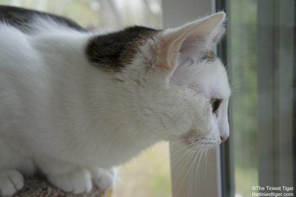 Annie birdwatching