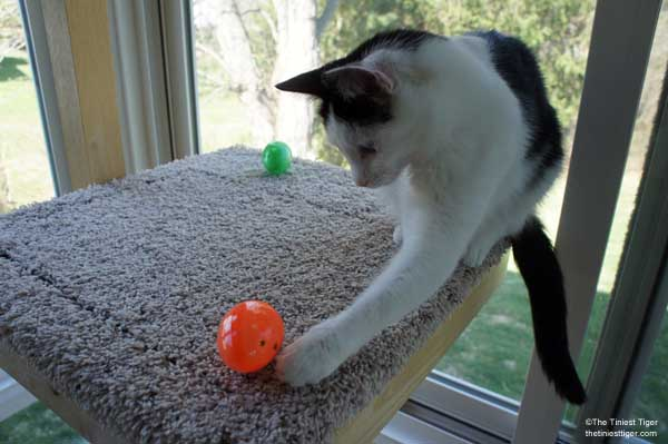 DIY Easter Egg Puzzle Feeder for Your Cats