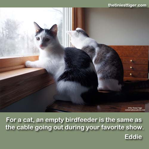Eddie birdfeeder  quote