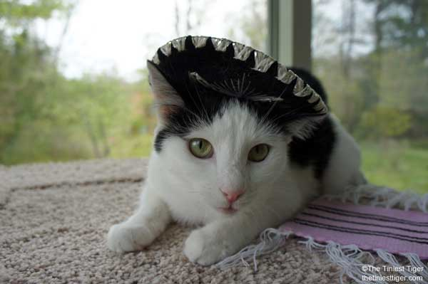 Eddie in Sombrero