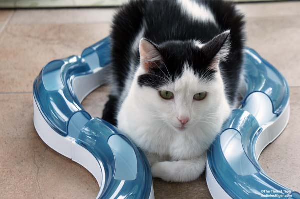 Eddie claims the CatIt Super Roller