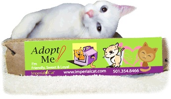 Kitty  Adopt me Imperial Cat