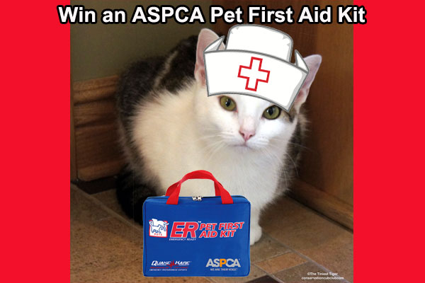 ASPCA giveaway Annie