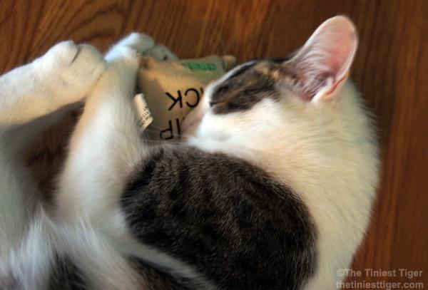 Annie with Nutrish cat nip
